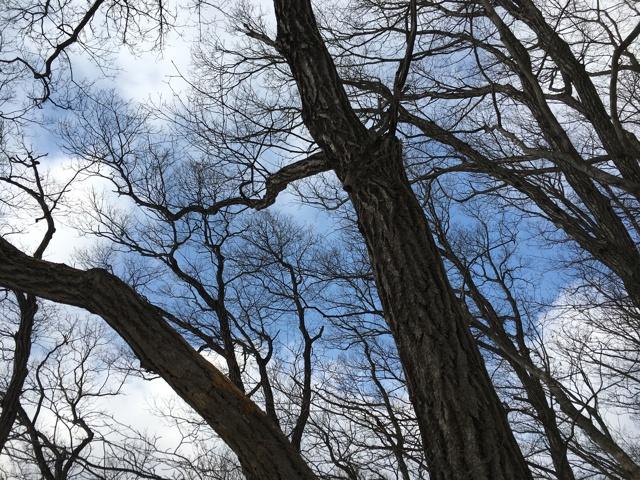 木々の隙間から青空